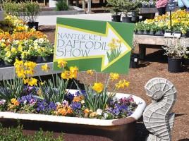 2013 Nantucket Daffodil Festival
