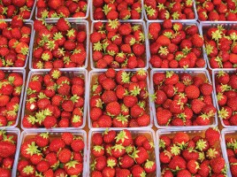 Nantucket Strawberry Festival | Bartlett's Farm | Nantucket, MA