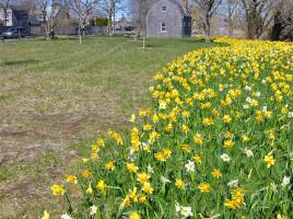 Arthur's Park | Nantucket, MA