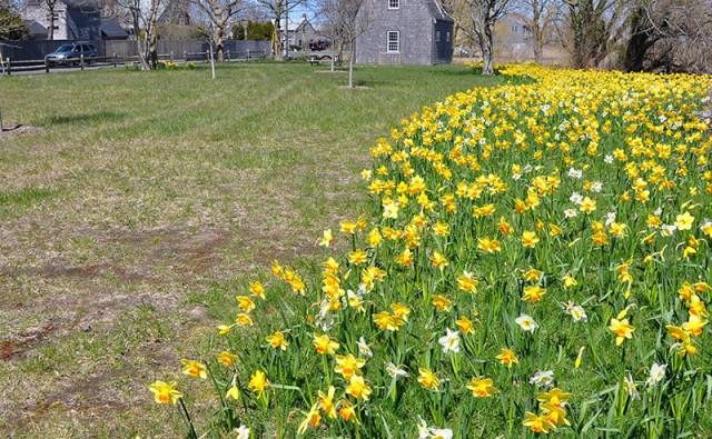Arthur's Park   Nantucket, MA