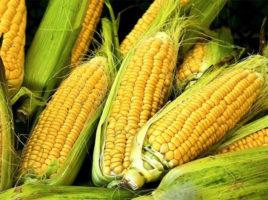 Summer Corn Recipes | Nantucket, MA