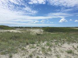 Coskata-Coatue Wildlife Refuge | Nantucket, MA