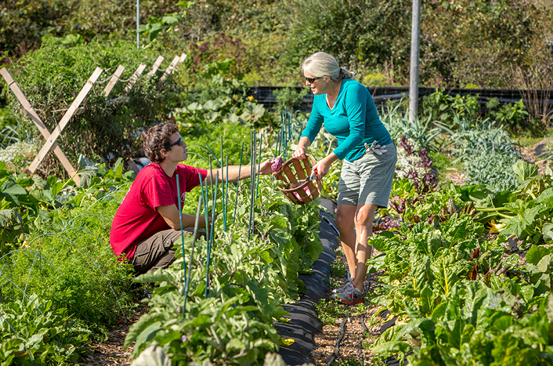 Sustainable Nantucket Community Farm