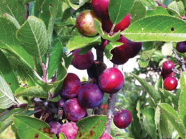 Foraging on Nantucket Island