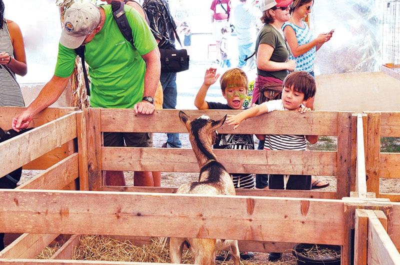 Nantucket Island Fair | Nantucket, MA