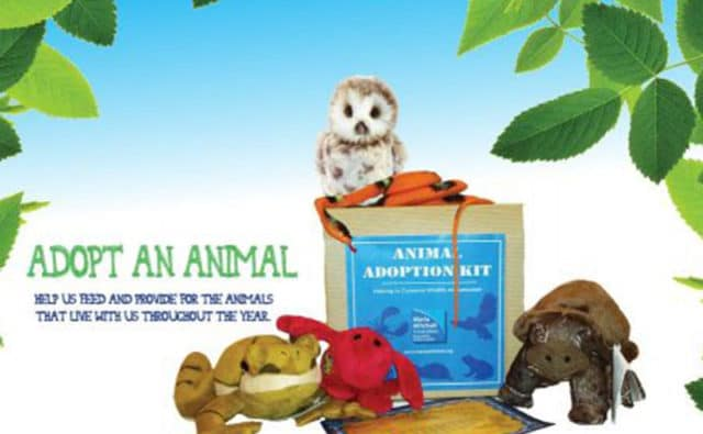 Adopt an Animal | Maria Mitchell Association of Nantucket