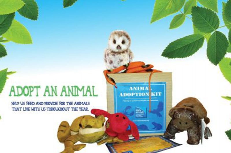 Adopt an Animal | Maria Mitchell Association of Nantucket