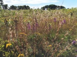 Grasslands | Nantucket, MA