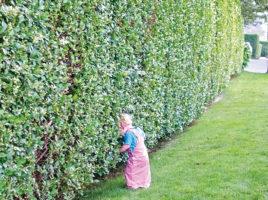 Well Kept Hedge | Nantucket, MA