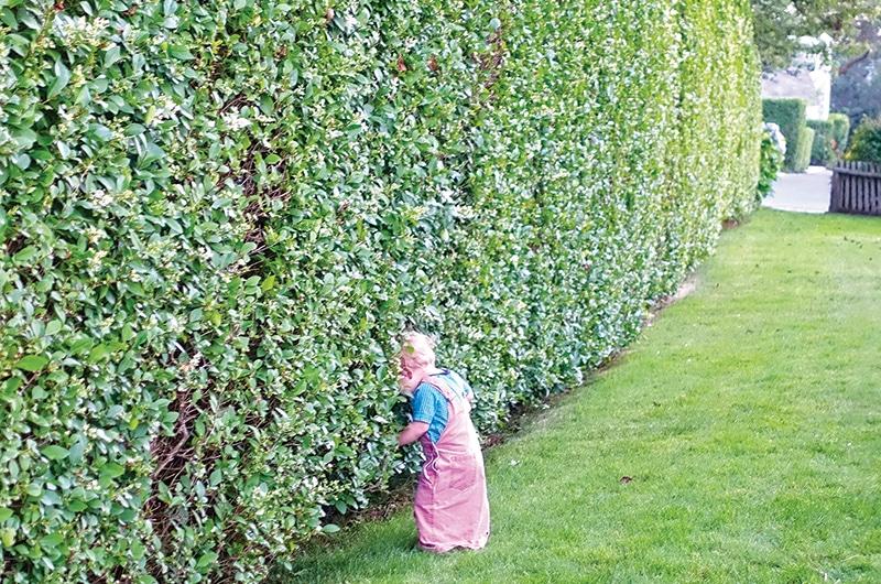Well Kept Hedge   Nantucket, MA
