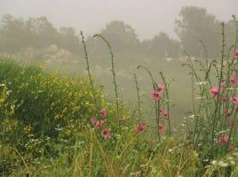 Flowers in Mist | Nantucket, MA