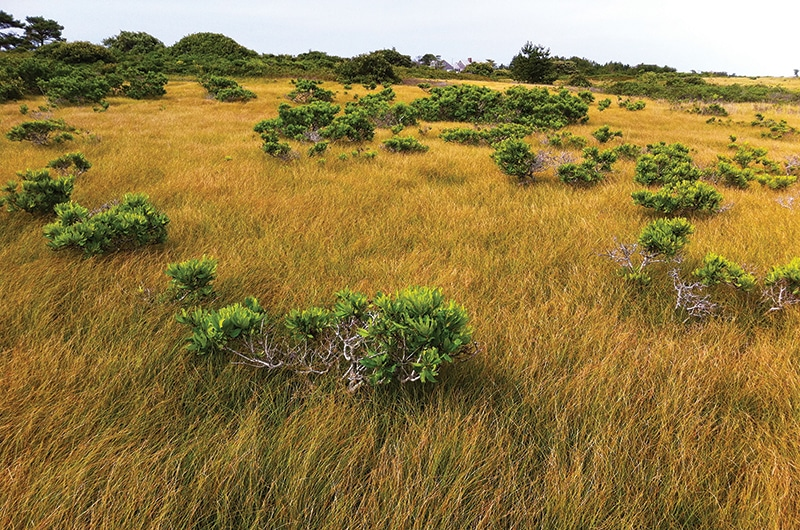 Sandplain Grasslands | Nantucket, MA