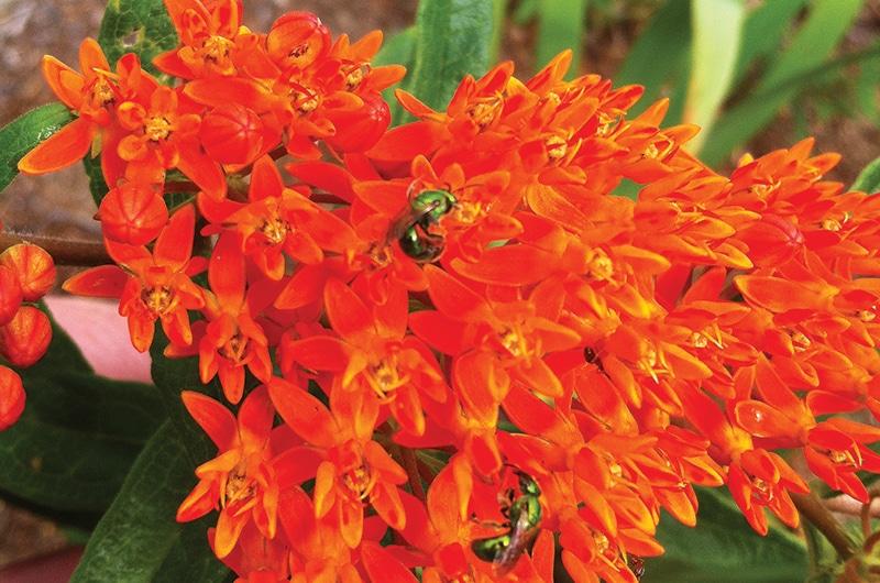 pollinators | Nantucket, MA