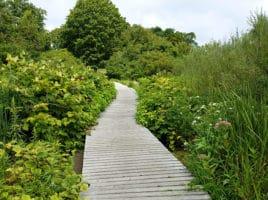 lily pond | Nantucket, MA