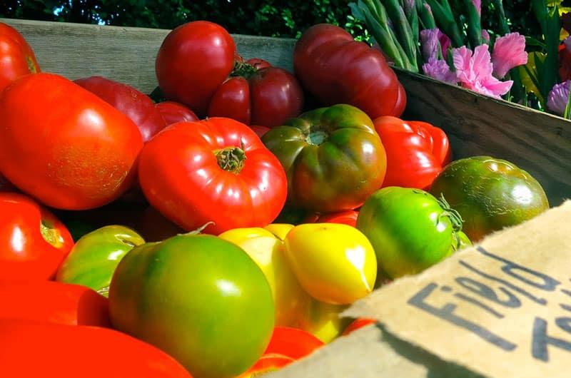 Tomatoes   Nantucket, MA