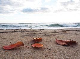 beach leaves | Nantucket, MA