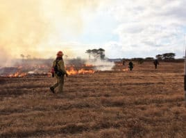 controlled burns | Nantucket, MA