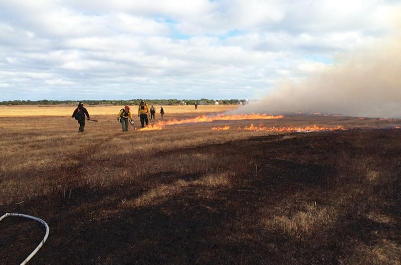 controlled burns | Nantucket, MA