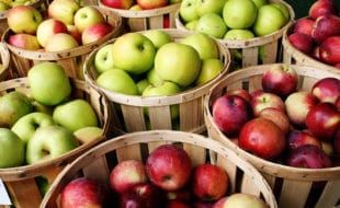 apples | Nantucket, MA