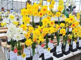 Daffodil Festival | Nantucket, MA