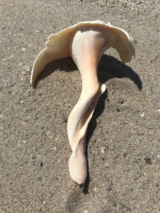 beachcombing | Nantucket, MA