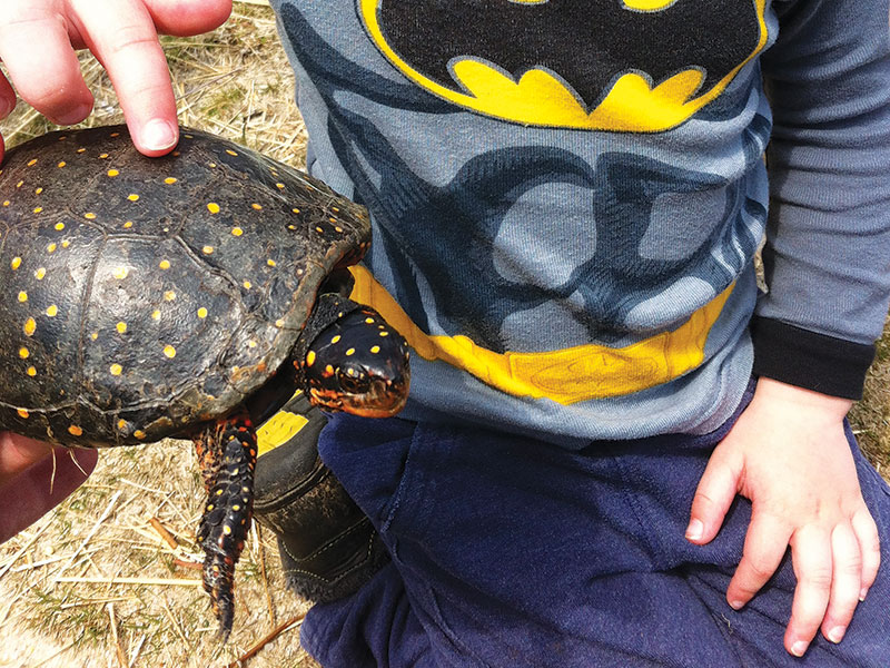 Spotted Turtle | Nantucket, MA
