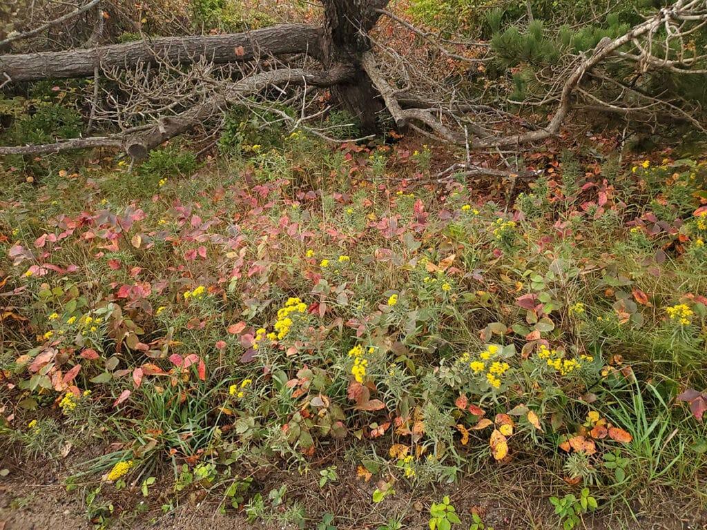 Fall on Nantucket | Nantucket, MA