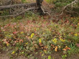 The Season of Change | Nantucket, MA
